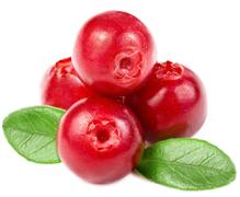 La Cranberry, ce petit fruit qui fait du bien !