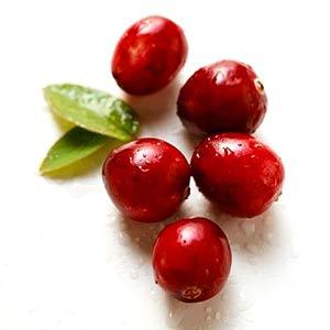 "La folie ""cranberry"" antioxydante"